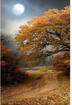 A Duna illata ősszel
