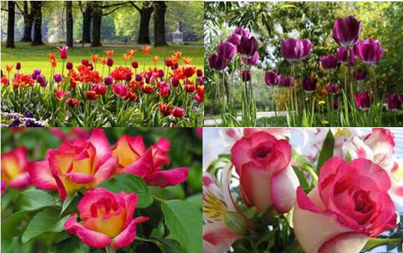 A kert, a növények, a virágok, a gyümölcsök otthona