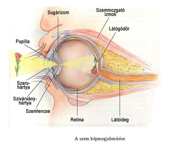 visszanyeri a látás rövidlátását asztali látásvizsgálatok